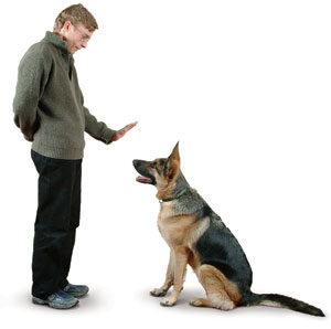 paura dei cani